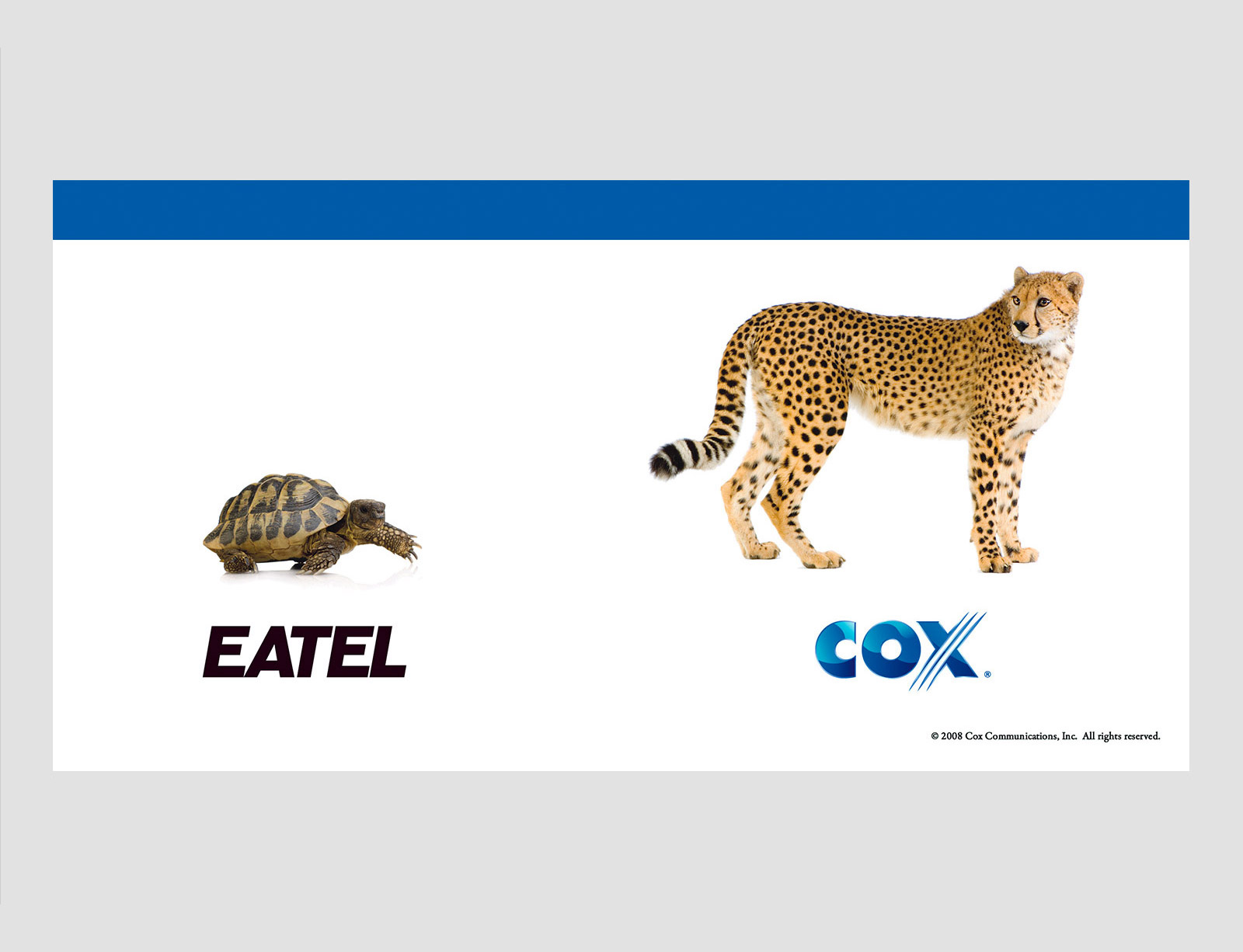 OUTDOOR_COX-30sheet-cheetah.jpg